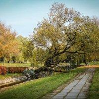 Минская осень 2014 :: Nonna