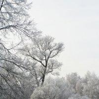 Зимняя сказка :: Анастасия Шаронова
