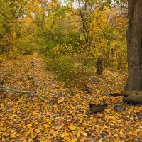 Осенняя пора :: Denis Aksenov