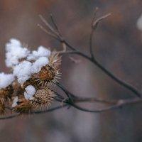 первый снежок :: Дед Жара