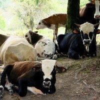 Отдых в горах Сочи :: Tata Wolf