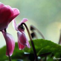 Скромная парочка или цве-точное семейство :: Олег Лукьянов