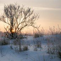 Городское одиночество :: Sergey Apinis