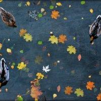 Осень листьями рисует гобелен :: Шаметько Инесса