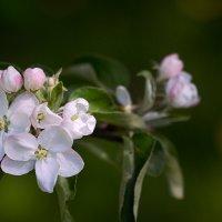 воспоминания о весне :: Эльмира Суворова