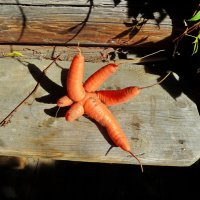 ...Звезда огорода!...:))))... :: Ира Егорова :)))