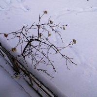 Хокку о зиме :: Ирина Сивовол