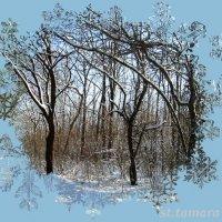 Волшебное окошко в зиму... :: Тамара (st.tamara)