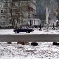 Жизнь собачья... :: Нина Корешкова