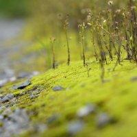 Игрушечный лес :: NICKIII Михаил Г.