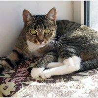 Кошка никогда не допустит, чтобы ее увидели в нефотогеничной позе. :: muh5257