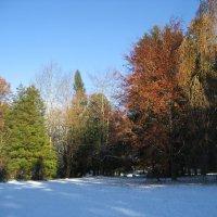 Первый снежок :: laana laadas