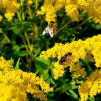 какие вкусные цветочки! :: Вера Андреева