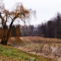 прощание с осенью :: Наталия Рой