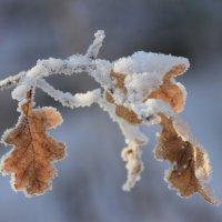 С началом зимы! :: Ната Волга