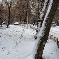 Снег выпал :: Елена Каталина