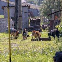 старик и собаки :: gribushko грибушко Николай