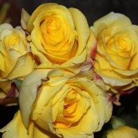 Букет из жёлтых роз :: Людмила