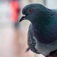 птичья порода :: Тася Тыжфотографиня