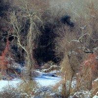 Сказочный лес :: anna borisova