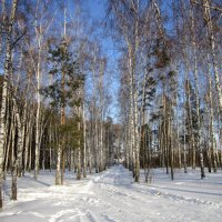 Зима.Сибирь .2 12 2014 . :: Мила Бовкун