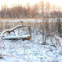 Первые морозы :: Angelika Faustova