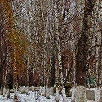 краски зимнего утра :: Александр Корчемный