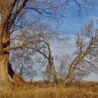 Деревья осенью :: Андрей Куприянов