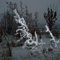 Зимние зарисовки... :: Сергей Петров