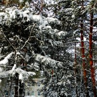 В Хабаровский край пришла зима /серия/ :: Николай Сапегин
