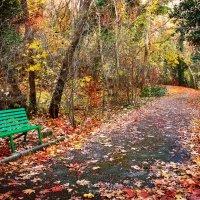 Чувствую запах осени... :: Сергей Тарапата