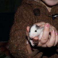 Mouse :: Christina Terendii