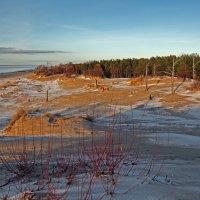 Северодвинск. Море и сосновый бор :: Владимир Шибинский