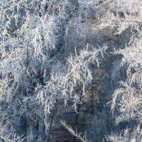 Зимнее утро :: Самохвалова Зинаида