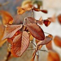 Осенний :: Мария Богуславская