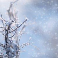Зима, мороз и немножко фотошопа :: Дмитрий Зубенин