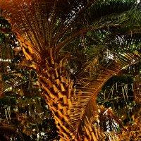Пальма в Аптекарском огороде :: Владимир Болдырев