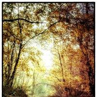 Дорога в лесу :: Василий Малыш