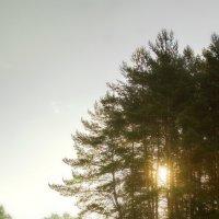 Утро в лесу :: Илья Попов