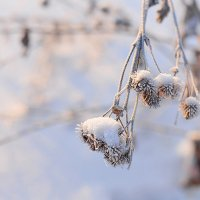 Морозный день :: Алиса Бронникова