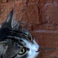 мой кот :: ТатьянКА Кузнецова