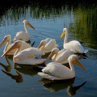 Пеликанье озеро :: Ирина Сивовол