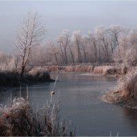 Морозный день :: Николай Алехин