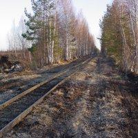 Единственная дорога к току через торфяные болота - узкоколейка. :: Андрей Синицын