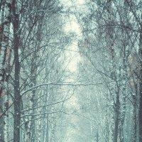 Первый снег :: Ненси .