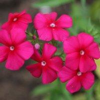 Аленький цветочек - исполни все желания! :: Милена )))