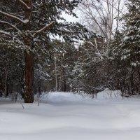 Красота зимнего леса. :: Kassen Kussulbaev