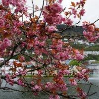 Расположенное в центре Бергена озеро Lungegardsvann с фонтаном и прилегающие к нему окрестности... :: Елена Смолова
