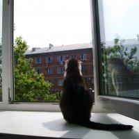 В мире животных :: Инна Буяновская