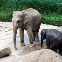 Слониха и малыш. :: Anna Gornostayeva